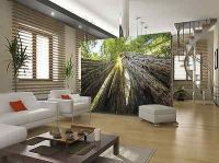 Wall mural HUGE REDWOODS photo wallpaper Large size wall ...